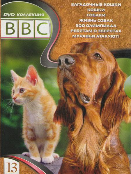 BBC 13 (Загадочные кошки / Кошки / Собаки / Жизнь собак / Зоо олимпиада / Ребятам о зверятах / Муравьи атакуют)
